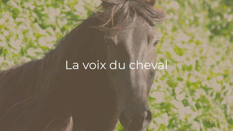 la-voix-du-cheval