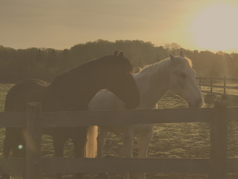 chevaux-voix-du-cheval